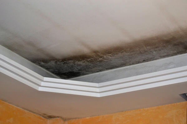 Mold in the ceiling