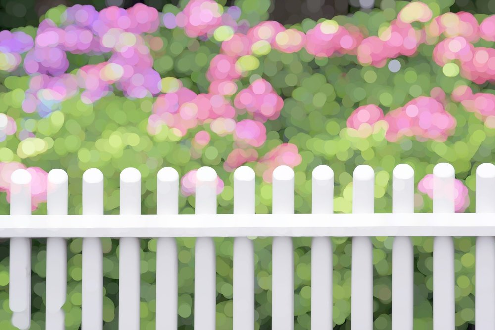 Bright varicolored abstract of white picket fence by hydrangea shrubs with pink flowers and green foliage, for themes of summer, gardening, or landscaping